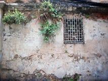 在近墙壁上的生长植物禁止窗口 免版税库存图片
