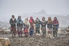 在返回的雪等待的动物中间的老妇人从牧场地 免版税库存图片
