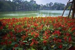 在还剑湖的红色花 图库摄影