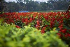 在还剑湖的红色花 免版税库存图片
