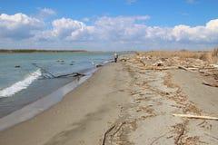 在这个区域Delta del Po二威尼托,一个自然天堂 在岸的漂流木头 意大利 免版税库存照片