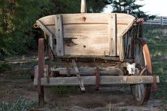 在远的西部无盖货车的绵羊头骨 免版税库存照片