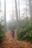 在远足旅行的家庭在有雾的森林里 库存图片