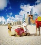 在迪拜海滩的骆驼 免版税库存照片