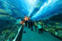 在迪拜购物中心,世界的最大的商城的水族馆 库存照片