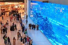 在迪拜购物中心,世界的最大的商城的水族馆 库存图片