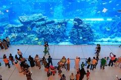 在迪拜购物中心,世界的最大的商城的水族馆 免版税库存照片