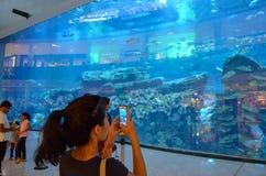 在迪拜购物中心,迪拜,阿联酋的水族馆 库存照片