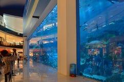 在迪拜购物中心,迪拜,阿联酋的水族馆 免版税库存照片