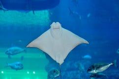 在迪拜购物中心,迪拜,阿联酋的水族馆 库存图片