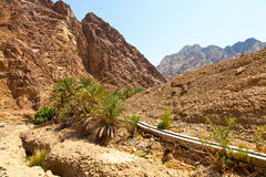 绿洲在迪拜 免版税库存图片