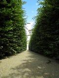 在迷宫庭院迷宫灌木的道路步行 免版税图库摄影