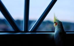 在迷恋视窗之外 图库摄影