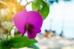 在迷离背景的紫色兰花 免版税图库摄影