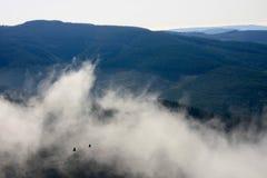 在迷雾山脉有雾的谷,南非的飞行朱鹭 免版税库存图片