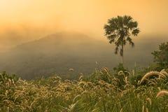 在迷雾山脉的日出 库存图片