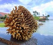 在迷离背景的珊瑚 免版税库存图片