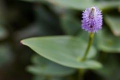 在迷离背景的美丽的淡紫色花 免版税库存照片