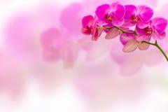 在迷离背景的紫色兰花花与您的文本的拷贝空间 免版税库存图片