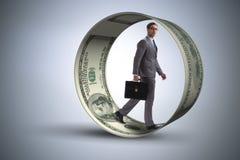 在追逐美元的仓鼠轮子的商人 库存图片