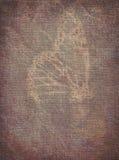 在退色的纹理的蝴蝶 免版税库存照片