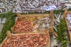 在逆鱼的各种各样的鱼在伊斯坦布尔购物 免版税库存照片
