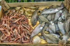 在逆鱼的各种各样的鱼在伊斯坦布尔购物 库存照片