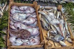 在逆鱼的各种各样的鱼在伊斯坦布尔购物 图库摄影