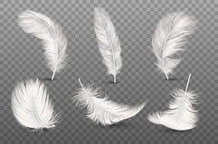 在透明度栅格背景隔绝的传染媒介3d现实另外落的白色蓬松旋转的羽毛集合特写镜头 向量例证