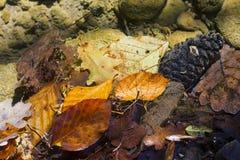 在透明河水的下落的叶子 图库摄影