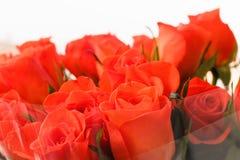 在透明清楚的玻璃纸包裹的橙色玫瑰 免版税库存图片