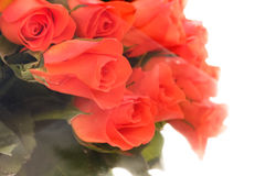 在透明清楚的玻璃纸包裹的橙色玫瑰 库存图片
