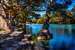 在透明的Frio河的明亮的美丽的秋叶 库存图片