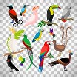 在透明背景的异乎寻常的热带鸟 免版税库存照片