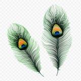 在透明背景隔绝的储蓄传染媒介例证孔雀羽毛 10 eps 免版税图库摄影