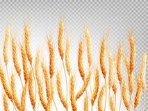 在透明背景隔绝的麦子 10 eps 免版税库存照片