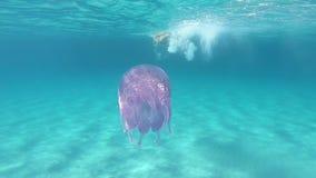 在透明蓝色的慢动作水下的游泳摄制的一年轻美女与Rhizostoma pulmo,一般叫作ba 股票录像