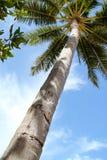 在透视图的一棵高热带棕榈树 免版税库存照片