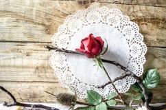 在透雕细工白色餐巾背景的芽红色玫瑰与干燥枝杈的 图库摄影