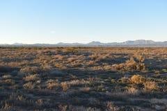在途中的美好的日落对Meerkat冒险在Oudtshoorn,一点南部非洲的干旱台地高原在南非 免版税图库摄影