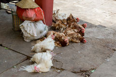 在途中的鸡销售 免版税库存图片