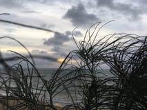 在通过木麻黄属的各种常绿乔木树针被看见的太平洋上的日出生长在海滩在考艾岛海岛,夏威夷上的Kapaa 图库摄影