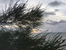 在通过木麻黄属的各种常绿乔木树针被看见的太平洋上的日出生长在海滩在考艾岛海岛,夏威夷上的Kapaa 免版税库存图片