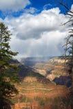 在通过树被看见的大峡谷的风暴 库存照片