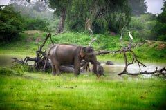 在通配的大象 库存图片