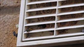 在通风孔里面的黄蜂巢 影视素材