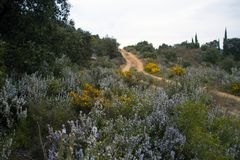 在道路旁边的罗斯玛丽领域 图库摄影