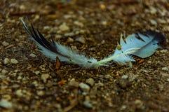 在道路的两根羽毛 免版税库存图片