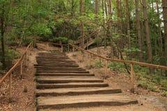 在道路的台阶在森林里 免版税库存图片