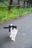 在道路的猫 免版税图库摄影